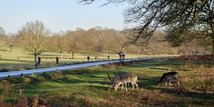 Richmond Park is home to over 650 free-roaming deer