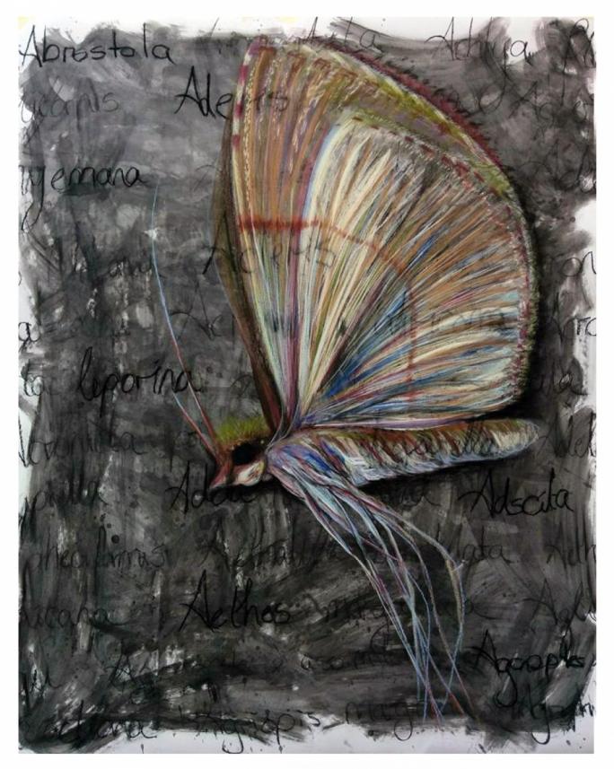 Abrostola Aderis Adscita by Sara Pace