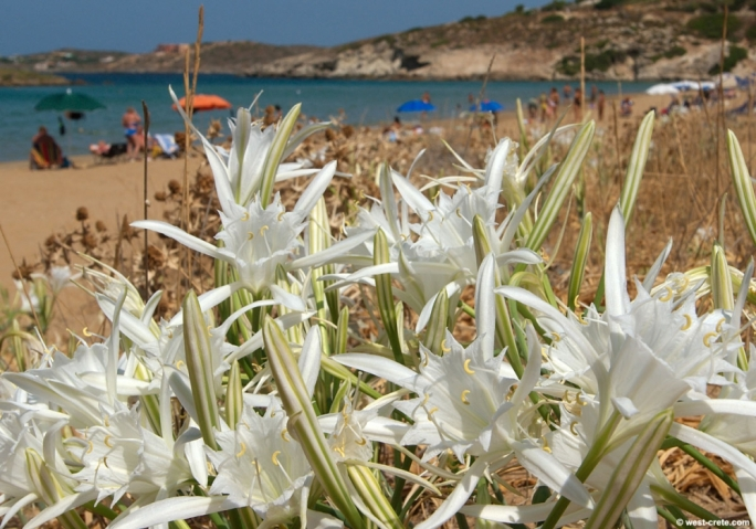 Sand dunes occupy 25 hectares of land in Malta