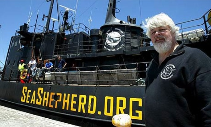 Sea Shepherd founder Paul Watson said Malta's politicians were being bribed by the tuna industry.
