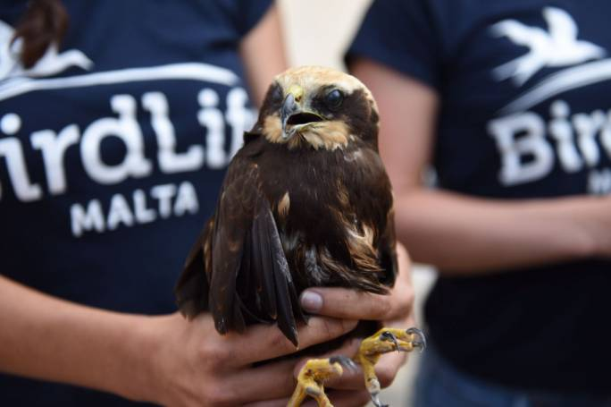 Birdlife Malta has pointed out poor law enforcement in hunting sites, after its Raptor camps informed the NGO that only three units are patrolling the country