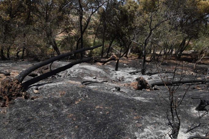 [WATCH] Miżieb fire aftermath reveals scorched woodland