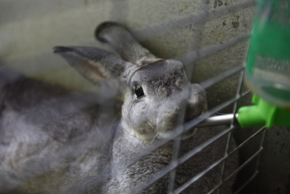 It's official: Maltese are highest consumers of rabbit in Europe