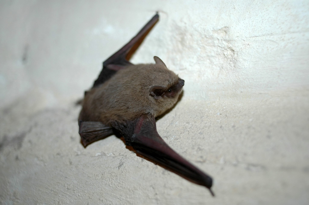 Concrete plant spells trouble for bat colonies in protected cave