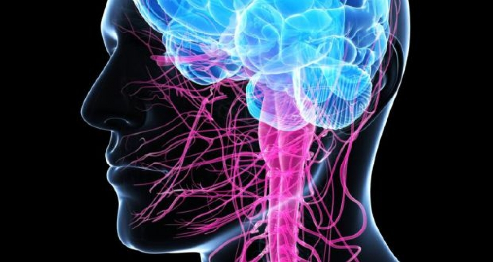 University of Malta study discovers Motor Neuron Disease pathway to potential treatment