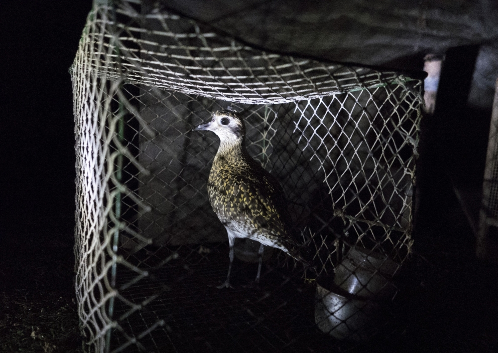 Update 2 | Malta reaches EC agreement on trapping, BirdLife questions legal changes