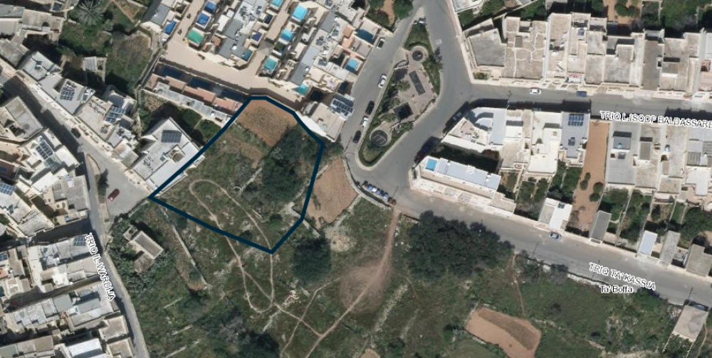 Carob trees to make way for seven-storey apartments in Qala