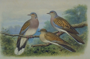 BirdLife's urgent appeal to end hunting of turtle dove in spring