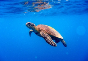 Fishing lines, nylon and hooks major cause of turtle deaths in Malta