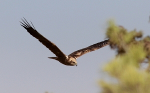 [WATCH] Birds shot down by hunters in Malta take to the skies once again