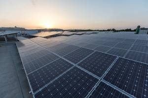 Nectar installs large solar farm in latest sustainability initiative