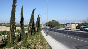 Infrastructure Malta says it has planted over 8,700 trees in 2019