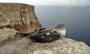 BirdLife calls on public to help stranded seabirds