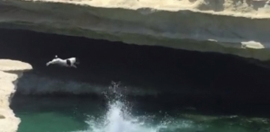 [WATCH] Pint-sized pooch thrills bathers with diving antics