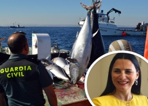 Tuna bribery claims: Suspended fisheries director says requests for payments were 'legitimate'
