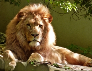 Environment and Resources Authority says no to illegal Rabat zoo