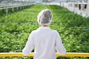 Three medical marijuana companies to create 118 jobs