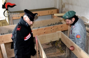 [WATCH] Italy police bust poachers who smuggled songbirds to Malta