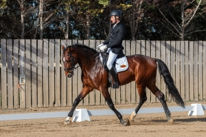 [IN PICTURES] No horseplay here: equestrians compete for Malta dressage honours