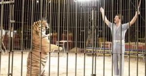 Circus trainer mauled to death by tigers in Italy