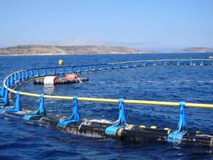 PA grants temporary permit for Comino fish farm relocation