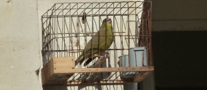 Trapped… on bird trapping
