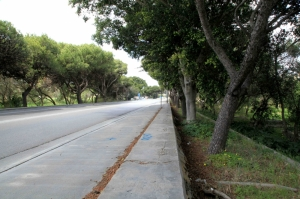 Ministry defends removal, relocation of Coast Road trees