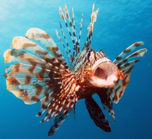 University research discovers new alien species in Maltese waters