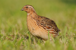 Spring hunting season dates raise BirdLife's ire