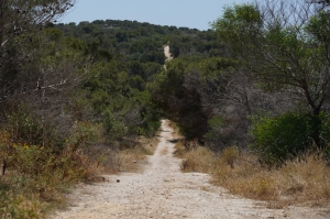 No title on Miżieb, l-Aħrax woodlands for hunters, ERA confirms