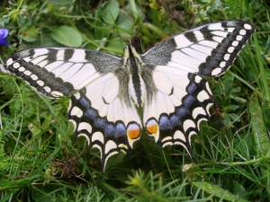 Newly discovered butterflies and orchids added to protection list
