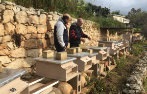 Malta's 200 beekeepers suffer funding loss due to 'copy-paste' EU rules