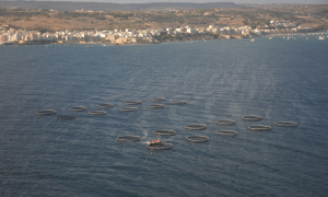 Fish farms face emergency enforcement order: two days to present plan of action