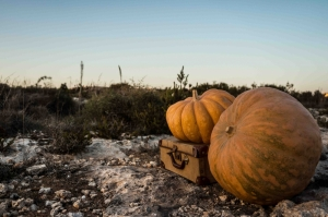 Pumpkin festival to be held in Manikata