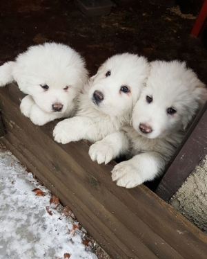 Italy avalanche: Three puppies rescued from Rigiopiano hotel rubble