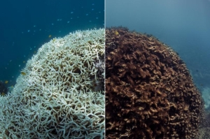Great Barrier Reef pronounced as 'almost dead' by scientists