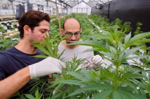 Australians MGC to sign medical cannabis agreements to start 4,000 sq.m facility in Malta