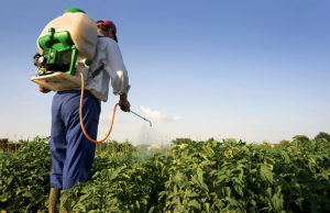 At least 13 cases of acute and chronic pesticide poisonings in five years