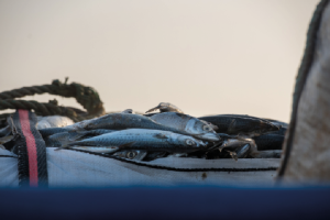 Brussels flags hygiene issues in Maltese fisheries
