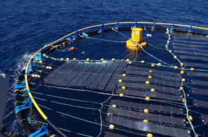 MCAST project seeks to generate solar energy from sea structures