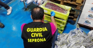 Updated | Spanish police arrest 79 over illegally-caught tuna from Maltese quotas