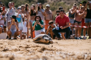 Loggerhead turtle Dodo released into the sea after yearlong rehabilitation