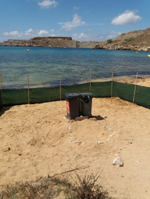 Turtle lays eggs at Ġnejna Bay; area cordoned off