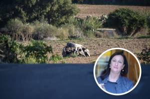 Daphne Caruana Galizia's body only identified from DNA analysis, court hears