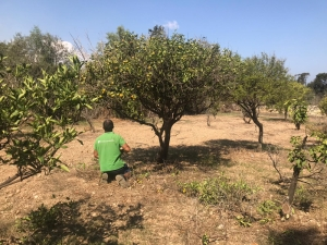 [WATCH] Paola's little known, big garden to get 13,000 trees and shrubs