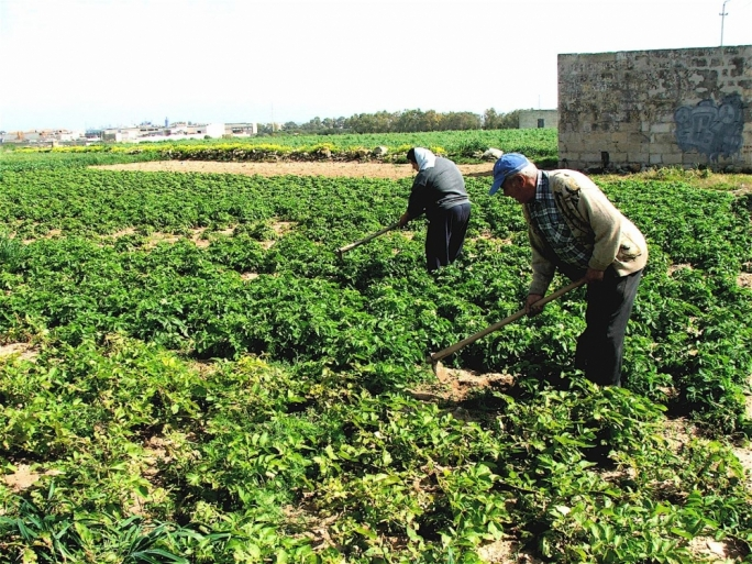 In the Press: Dry spell threatens local crops