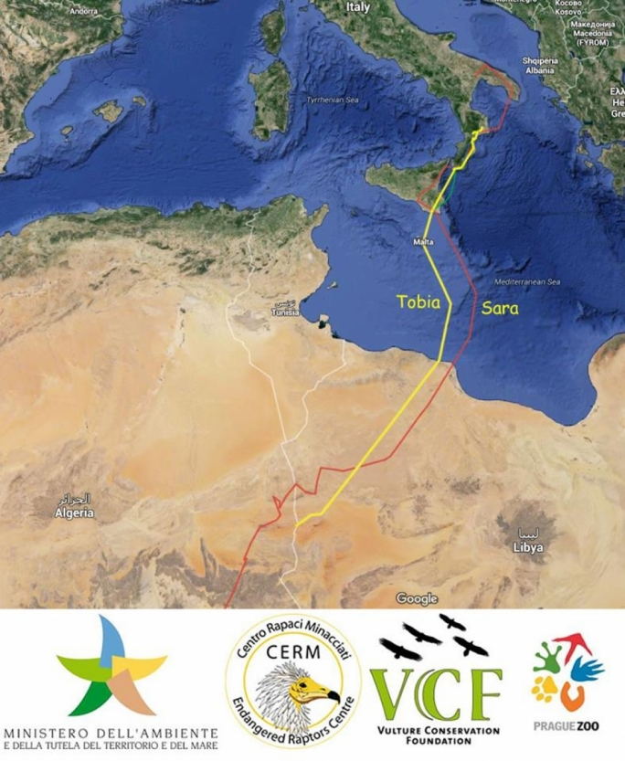 Tobia and Sara's migration route after being released from Calabria