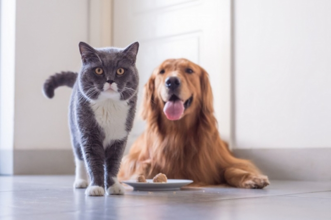 No evidence that pets can give coronavirus to humans, vets say