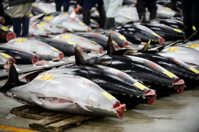 Spanish investigators link Maltese tuna rancher to illegal trade