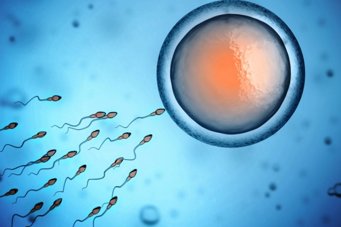 Egg fertilisation in IVF happens in a petri dish